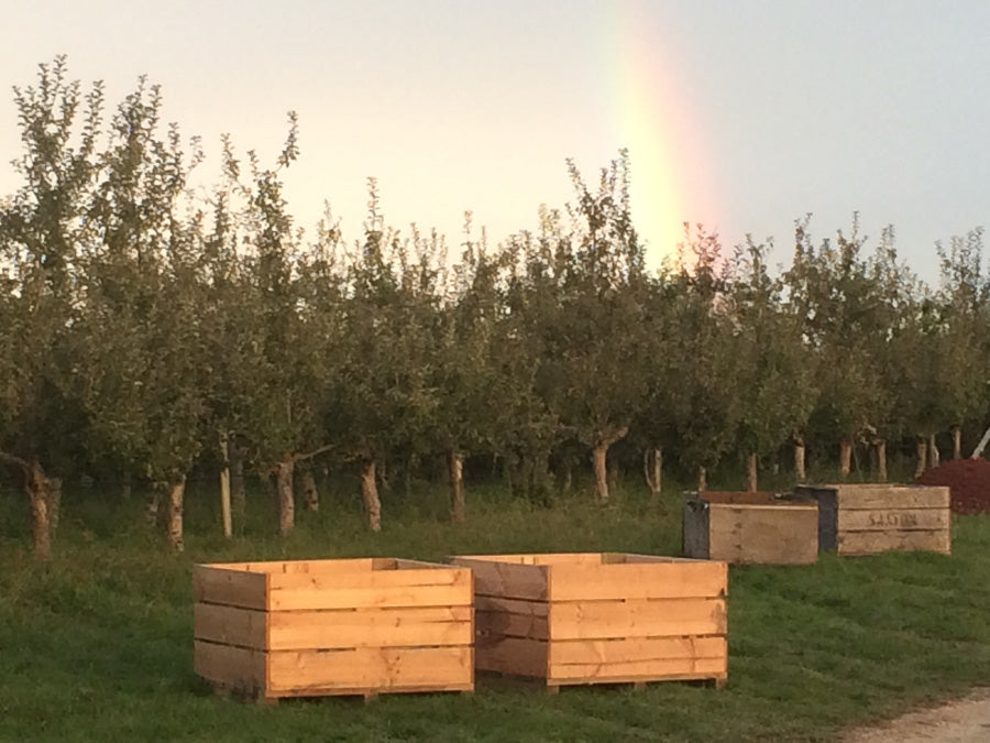 Rainbow over the cider Orchard