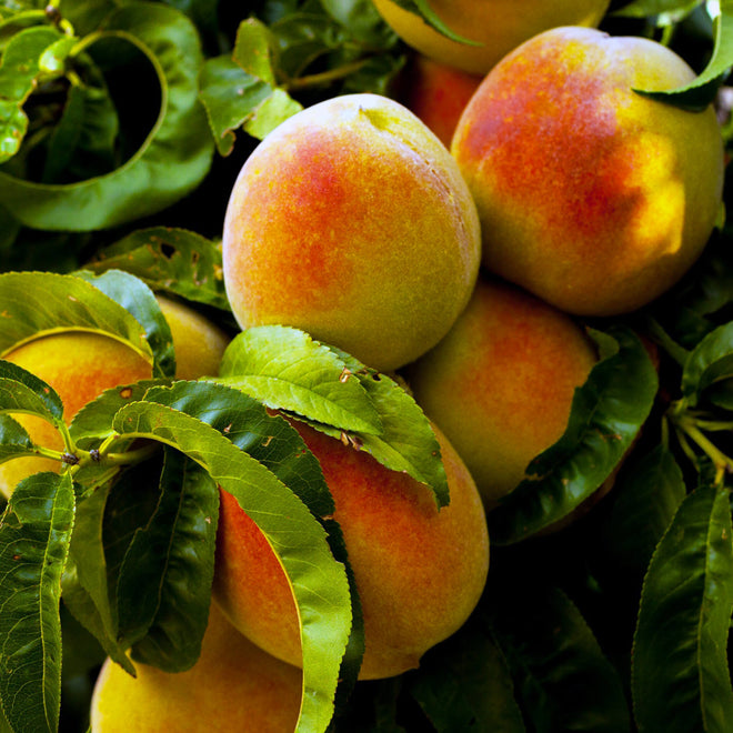 Peach Products