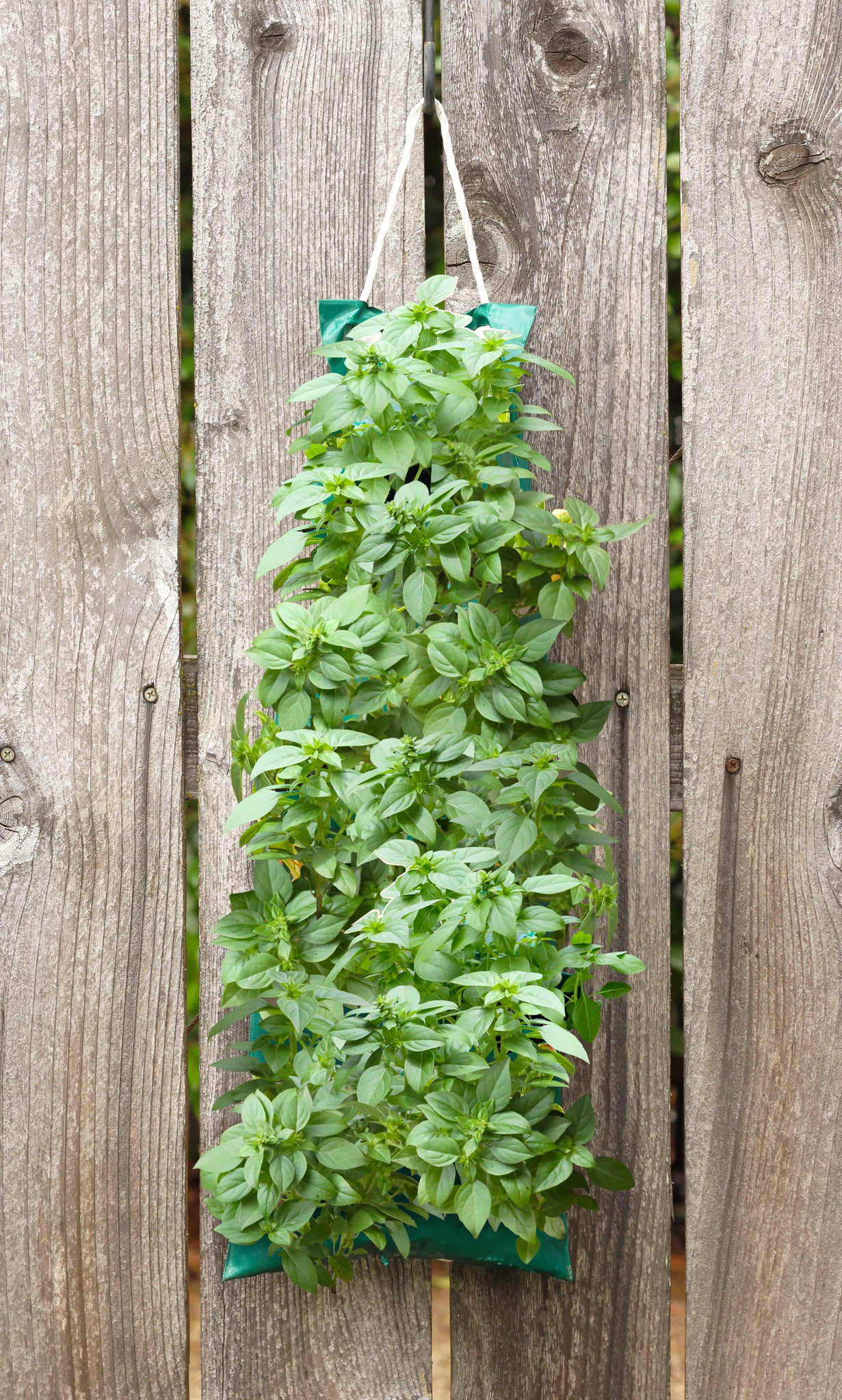 Basil Hanging Bag - Fredericksburg Farms