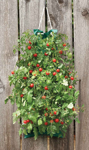 Hanging Cherry Tomato Kit