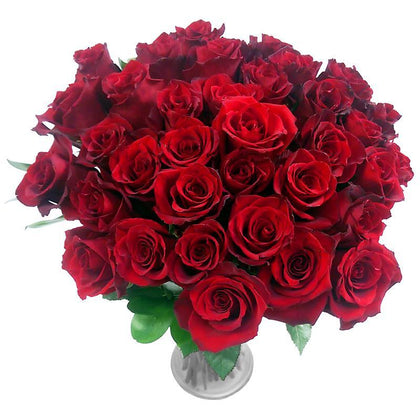 Three Dozen Roses BUnch - Big stem  - Expressluv.in