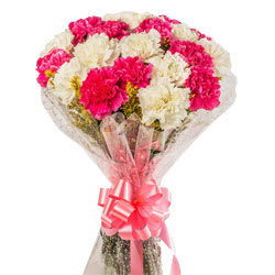 White & Pink Carnations  - Expressluv.in