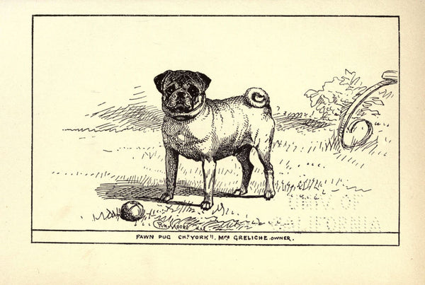 Vintage pug of pug you - Online store for pug lovers