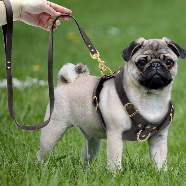 Genuine Leather Dog Harness and Leash Set Dog supplies PUGYOU