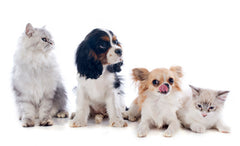 sortedfactory small cute dog breeds ,small dog breeds white