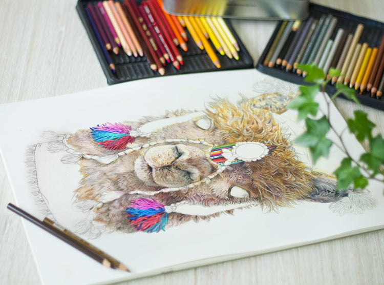 Coloured Pencil Illustrated Artworks - Alpaca in Progress