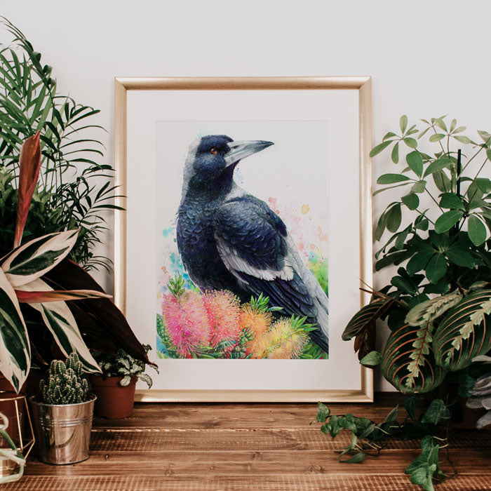 Magpie and Bottlebrush Art Print
