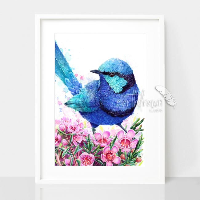 Blue Wren and Geraldton Wax Flower