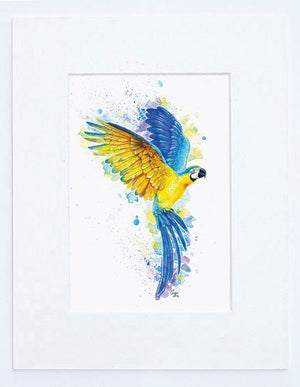 Blue & Gold Macaw Art Print
