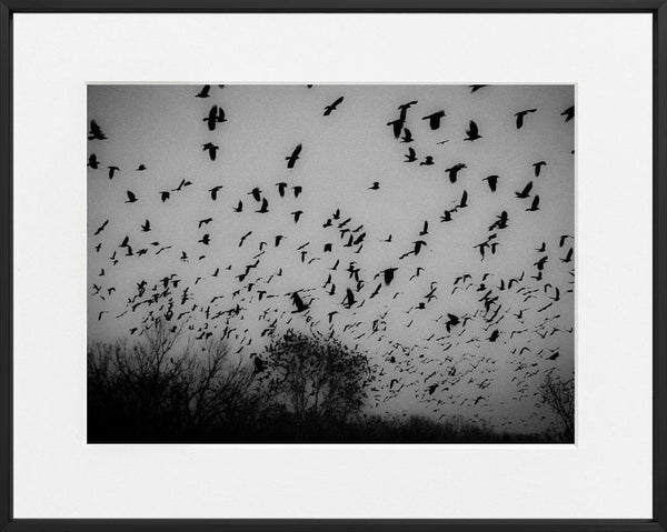 Nikola Balimezov-THE BIRDS-40x50 cm-limited editions-Monochrome Hub-Gallery for Fine Art Photography