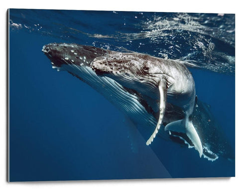 Martin Hristov-Humpback whales-II-Tonga--limited editions-Monochrome Hub-Gallery for Fine Art Photography