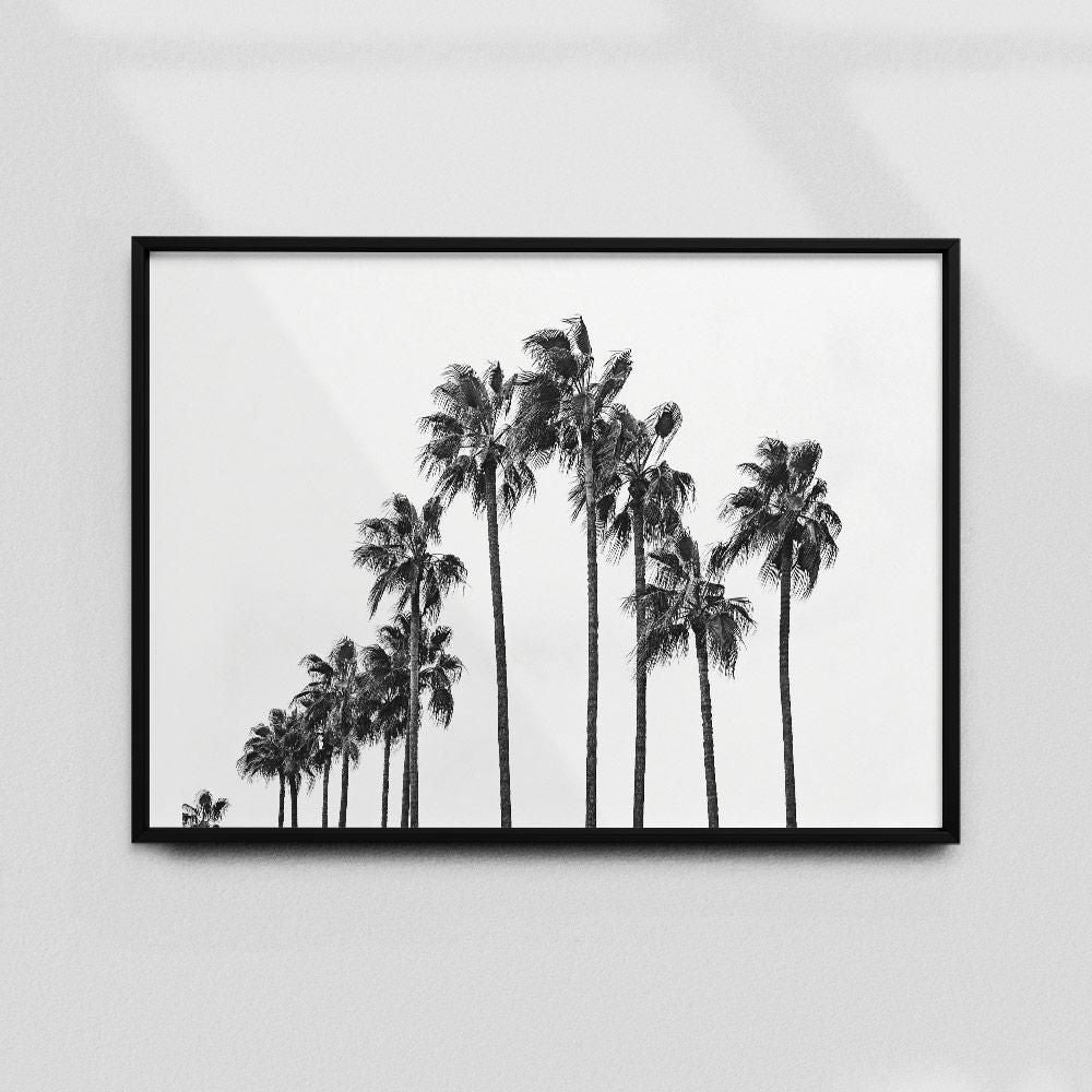 Monochrome Hub-PALMS-B&W-40x60 cm-posters-Monochrome Hub-Gallery for Fine Art Photography