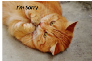 "Positive Words ""I'm Sorry"" Packs-Pack 5-(Cats) Downloadable"