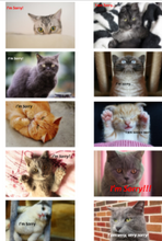 "Load image into Gallery viewer, Positive Words ""I'm Sorry"" Packs-Pack 5-(Cats) Downloadable"