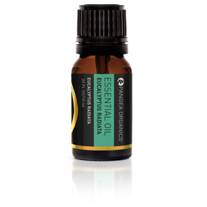 Essential Oil - Eucalyptus Radiata