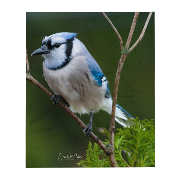 Blue Jay_004 Throw Blanket