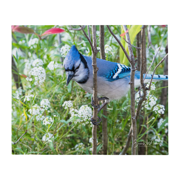Blue Jay_002 Throw Blanket