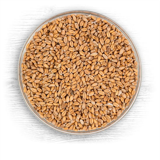 Red Wheat Raw