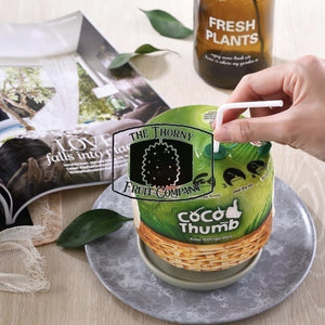 [IMPORTED] Coco Thumb Fresh Young Coconut - The Thorny Fruit Co
