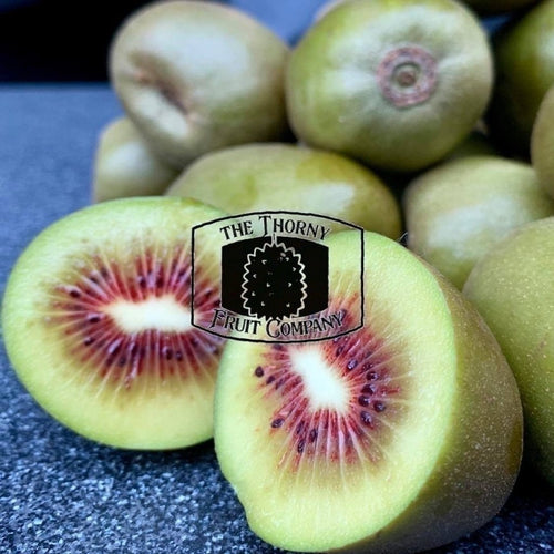 [PRE-ORDER] NZ Red Kiwifruit. Chinese gooseberry. Actinidia deliciosa - The Thorny Fruit Co