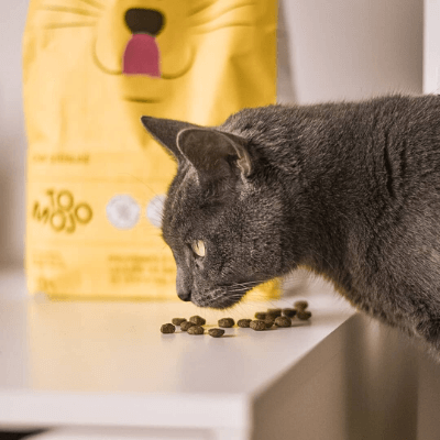 croquettes riches en protéines chat