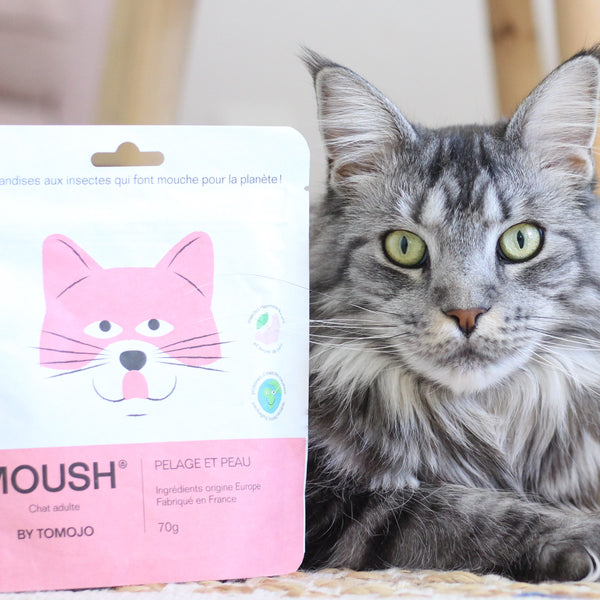 FRIANDISE MOUSH CHAT  POILS SOYEUX