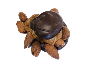 Almond Turtles