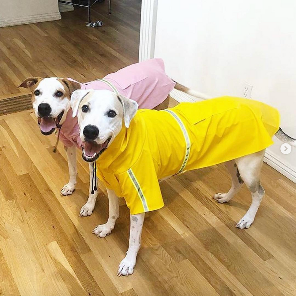 Ricco Rain Coat | 5 Colors - Playful Pooch Boutique - Online Dog Pet Store