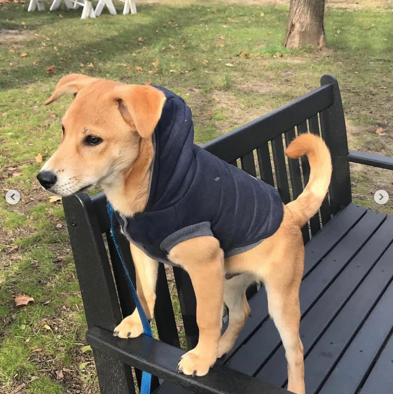 Gatsby Hoodie | 2 Colors - Playful Pooch Boutique - Online Dog Pet Store