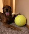 Jumbo Tennis Ball DUO SET - Playful Pooch Boutique - Online Dog Pet Store