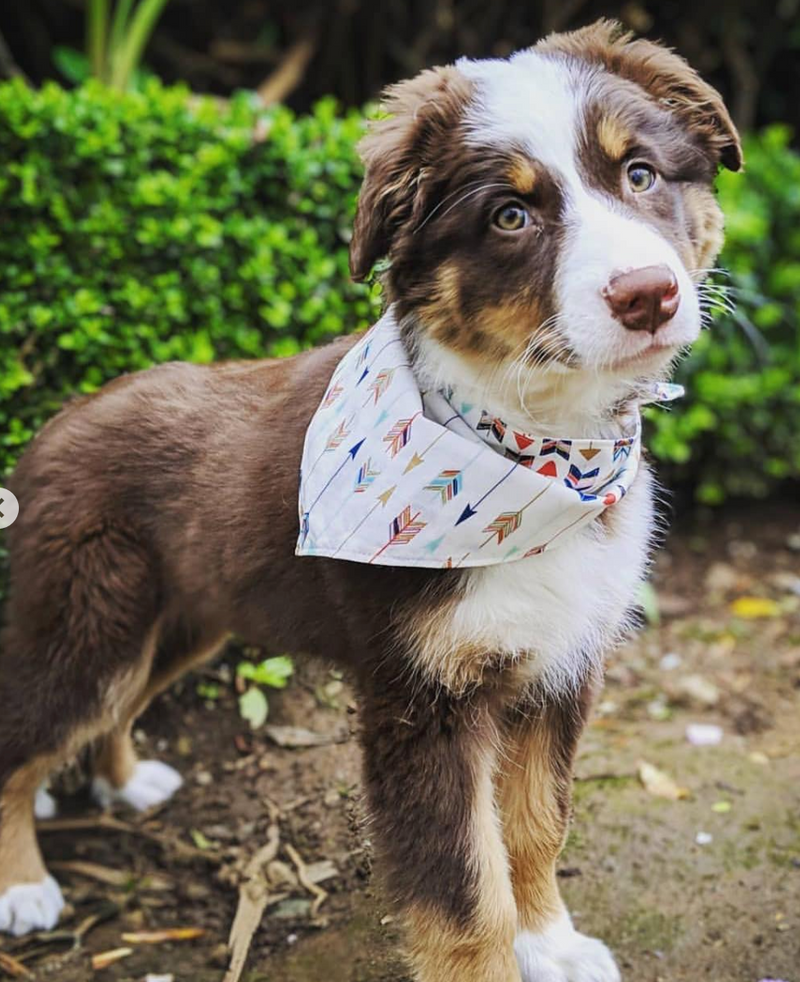 LUXE Barney Bandana Set | 2 Pack - Playful Pooch Boutique - Online Dog Pet Store