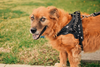 Harley Harness | 7 Colors - Playful Pooch Boutique - Online Dog Pet Store