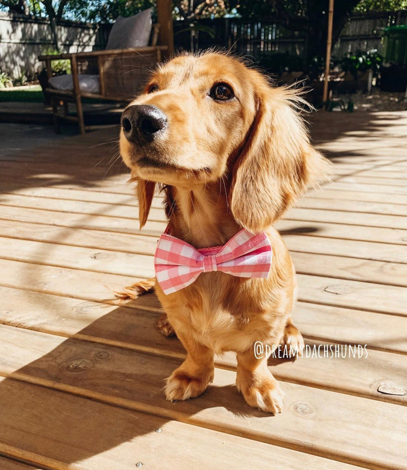 LUXE Baby Pink Design - Playful Pooch Boutique - Online Dog Pet Store