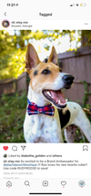LUXE Cody Check Design - Playful Pooch Boutique - Online Dog Pet Store