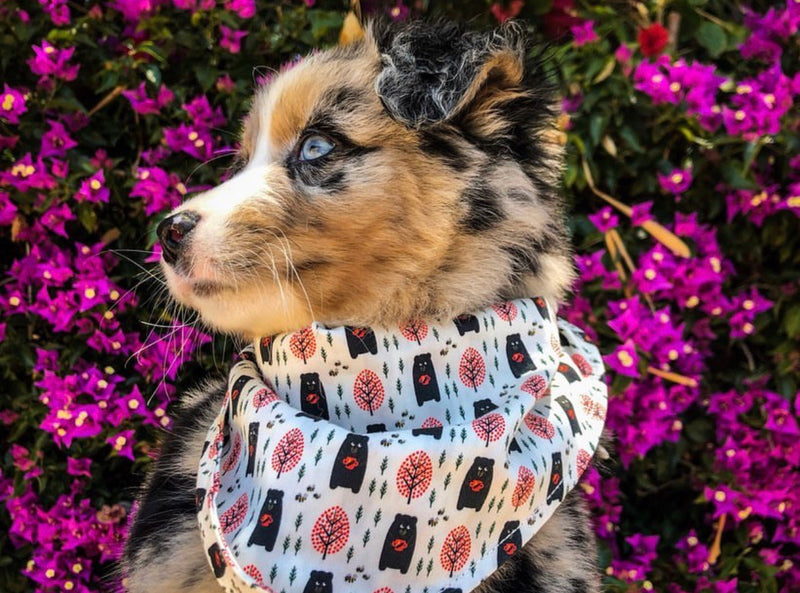 LUXE Bubbly Bear Bandana - Playful Pooch Boutique - Online Dog Pet Store