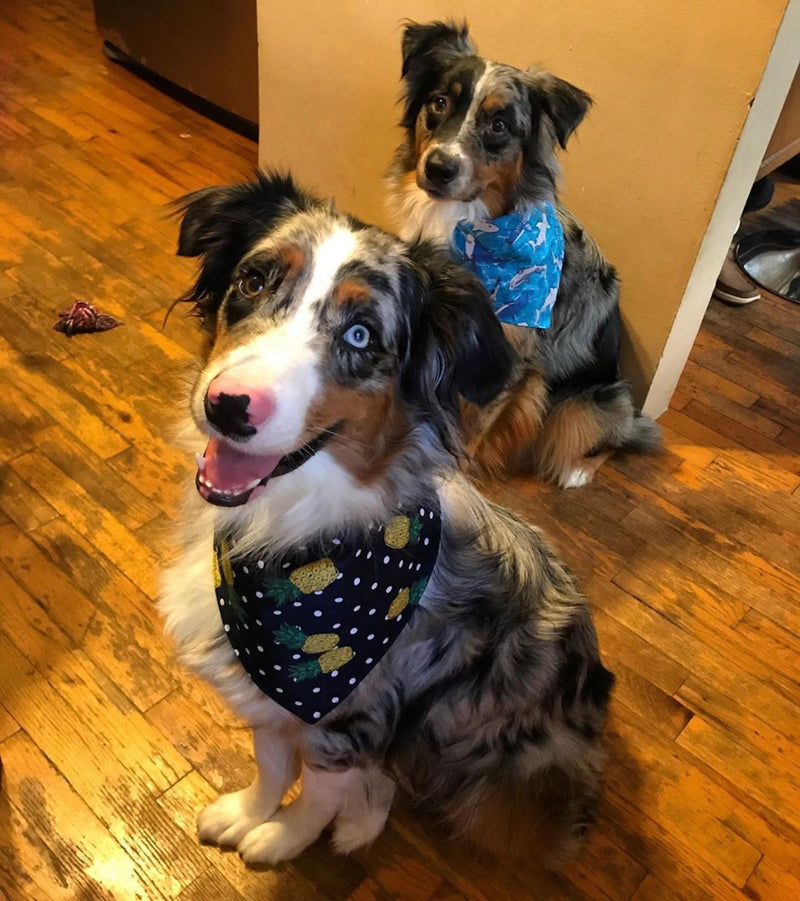 LUXE Brody Bandana Set | 2 Pack - Playful Pooch Boutique - Online Dog Pet Store