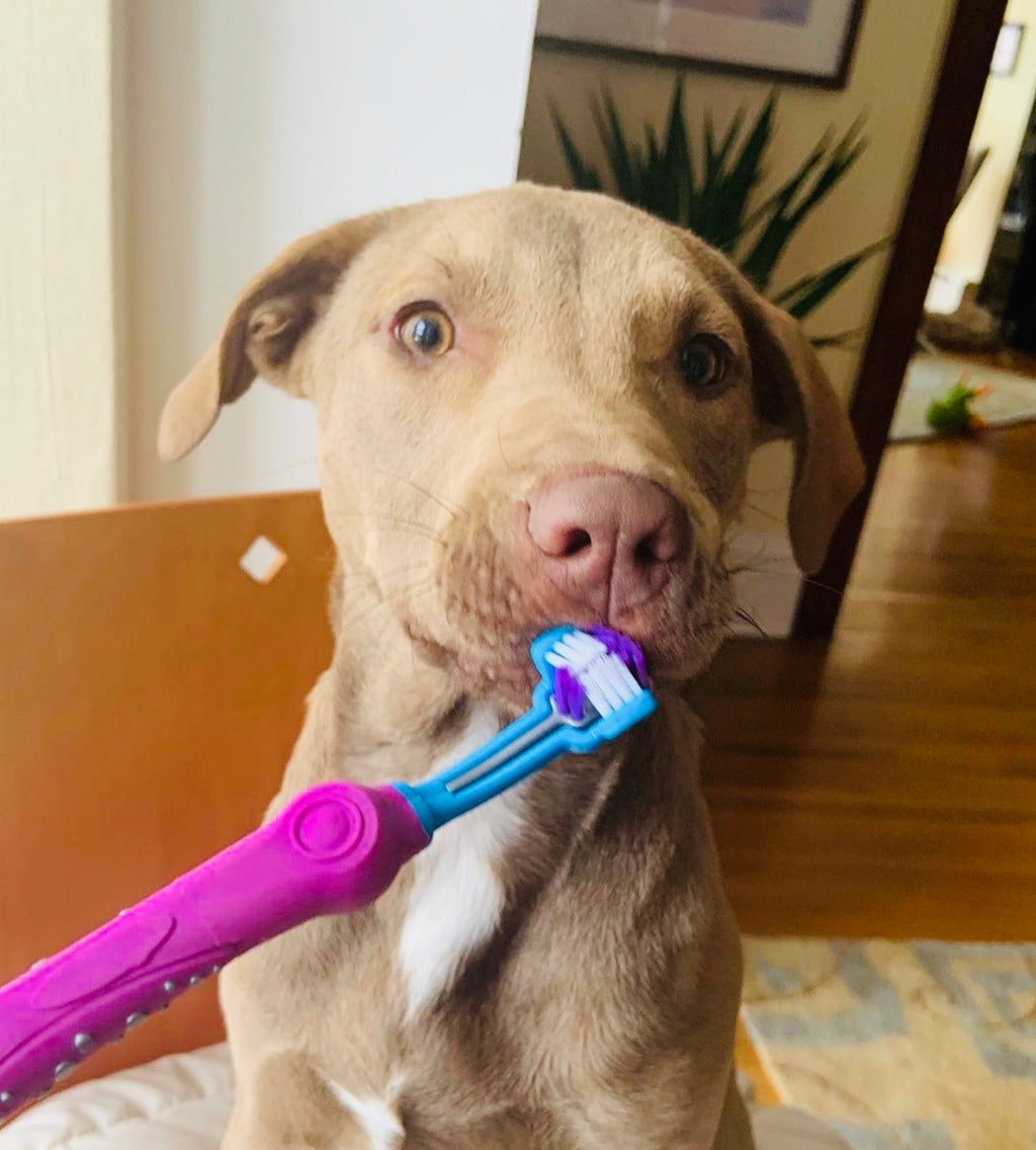 Otis 3-Sided Toothbrush | 4 Colors - Playful Pooch Boutique - Online Dog Pet Store