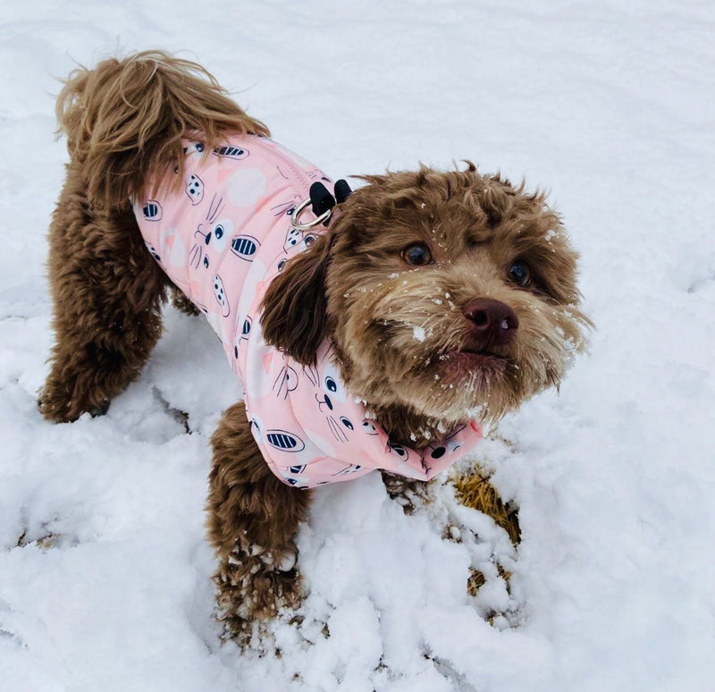 Pepi Puffer Jacket | Bunny - Playful Pooch Boutique - Online Dog Pet Store