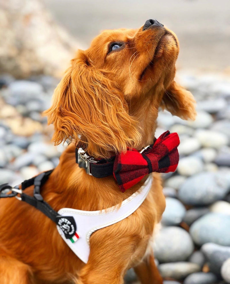 LUXE Parker Plaid Design - Playful Pooch Boutique - Online Dog Pet Store