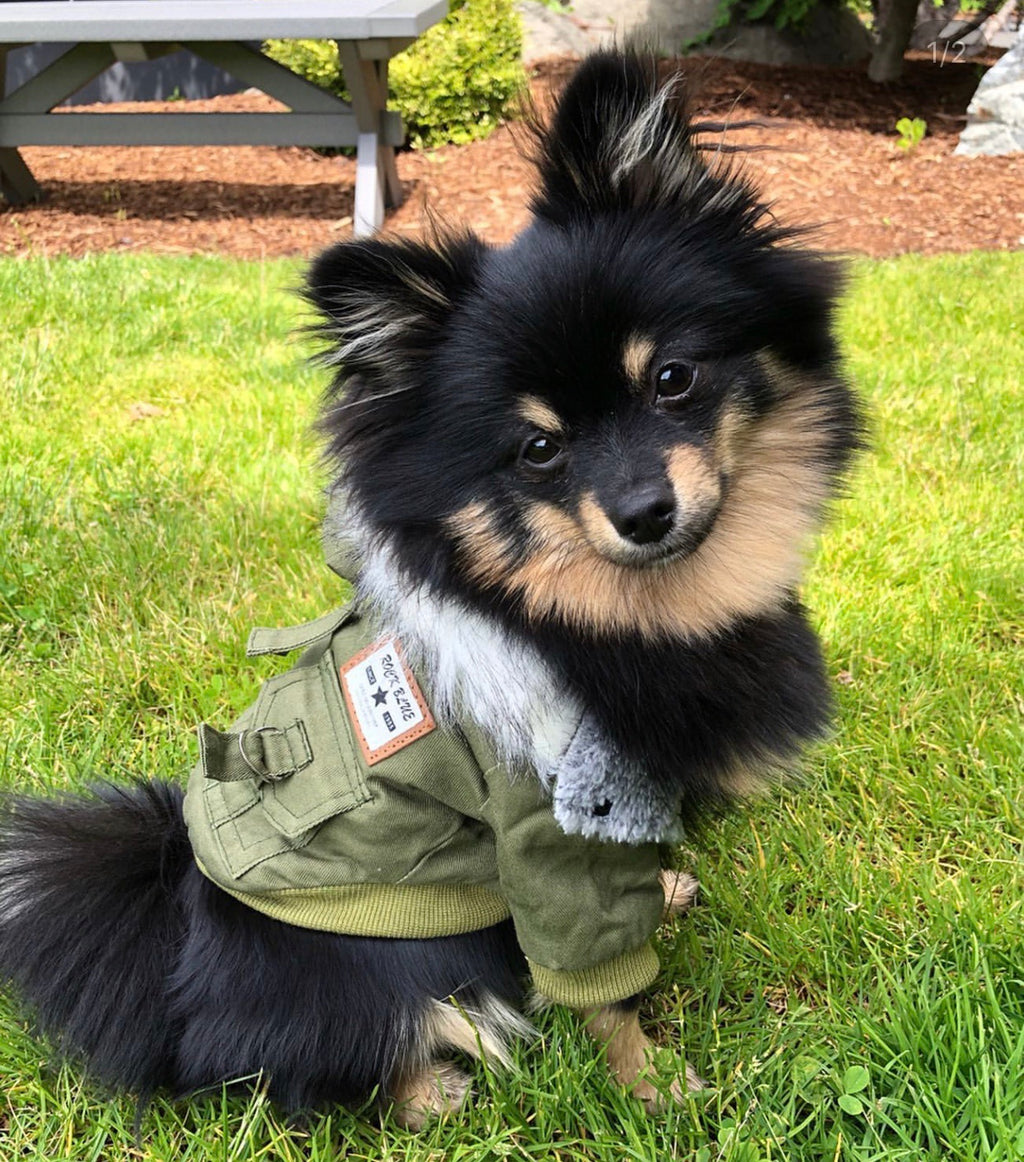 Bentley Bomber Jacket | 3 Colors - Playful Pooch Boutique - Online Dog Pet Store