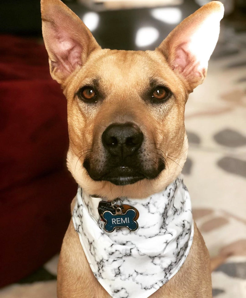 LUXE Marley Marble Bandana - Playful Pooch Boutique - Online Dog Pet Store