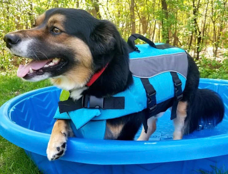 Scout Safety Life Jacket | 3 Colors - Playful Pooch Boutique - Online Dog Pet Store