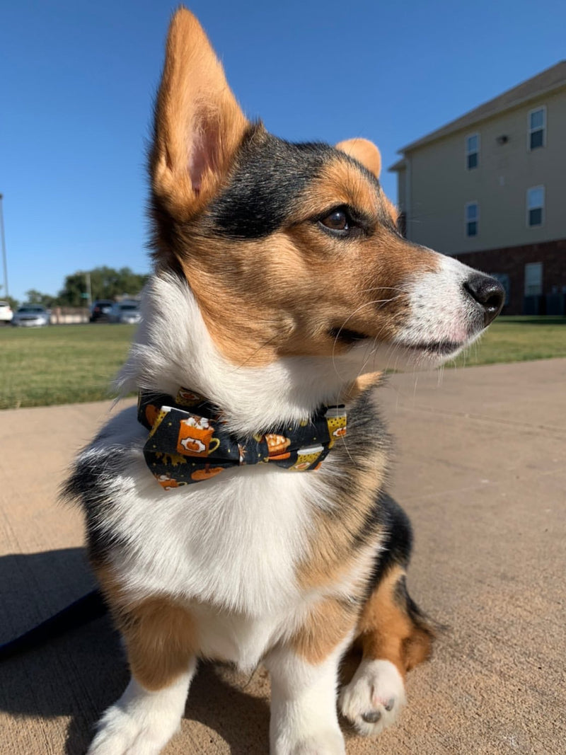 LUXE Pumpkin Pup Design - Playful Pooch Boutique - Online Dog Pet Store