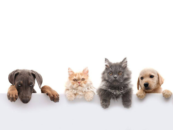Essential Oils That Are Safe for Your Pet