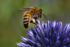 British bee guide: how to identify, where to spot, and how to attract bees to your garden