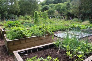 How To Grow Victory Gardens