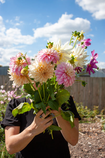 Growing Dahlias, a true passion