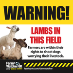Lambs in field warning sign suitable for farm gates, buildings etc.