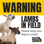 LAMBS IN FIELD WARNING SIGN