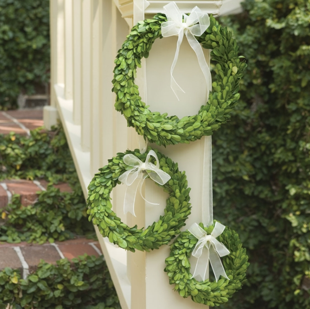 English Preserved Boxwood Wreath Large White Ribbon
